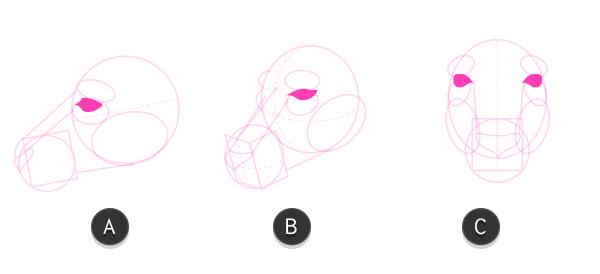 kangaroo how to draw head 7