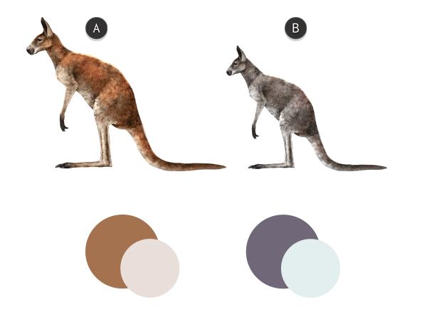 kangaroo color
