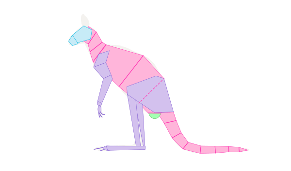 kangaroo under tail hump