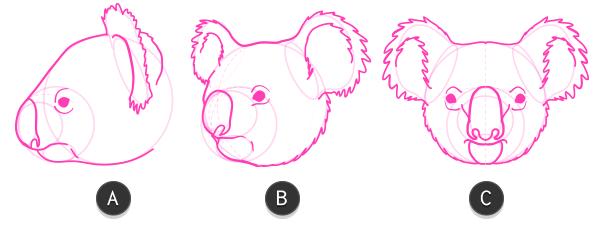 koala how to draw head 7