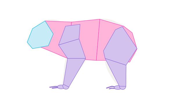 koala body muscles simplified