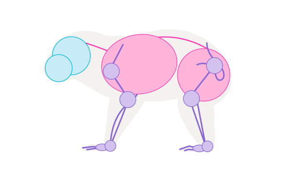 koala skeleton simplified