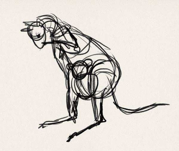 how to draw kangaroo koala illustration