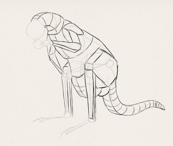 how to draw kangaroo koala illustration 3