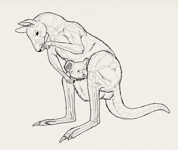 how to draw kangaroo koala illustration 6