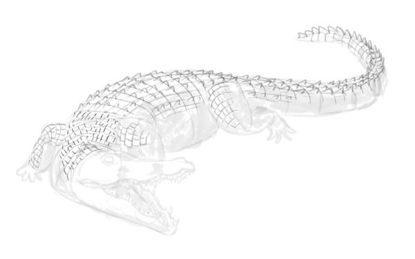how to draw crocodile step by step 13