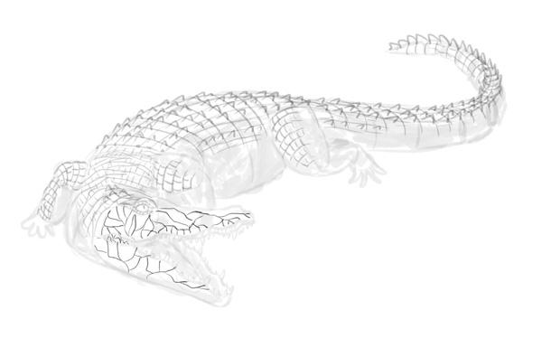 how to draw crocodile step by step 15