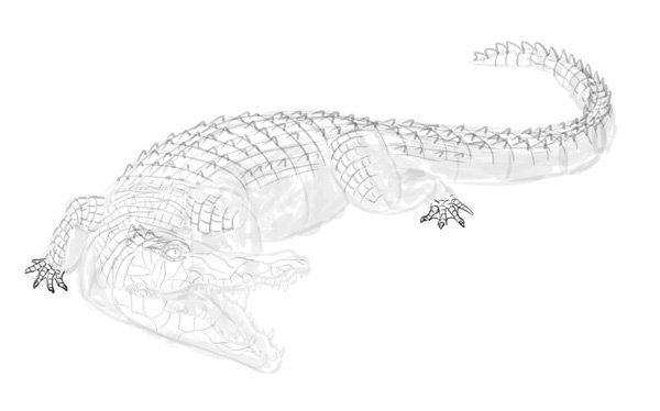 how to draw crocodile step by step 16