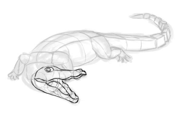 how to draw crocodile step by step 4
