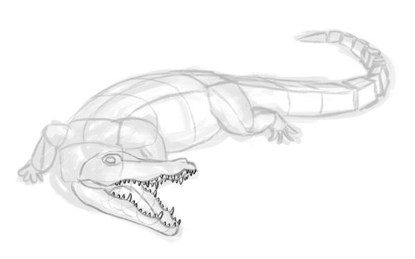 how to draw crocodile step by step 5