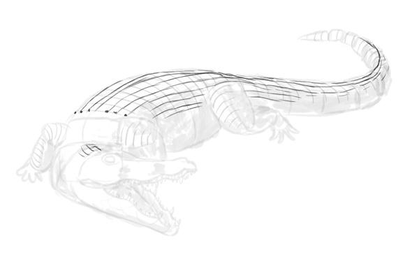 how to draw crocodile step by step 9