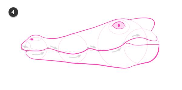 how to draw crocodile head 4
