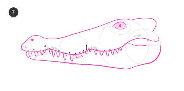 how to draw crocodile head 7