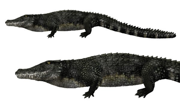 how to draw alligator