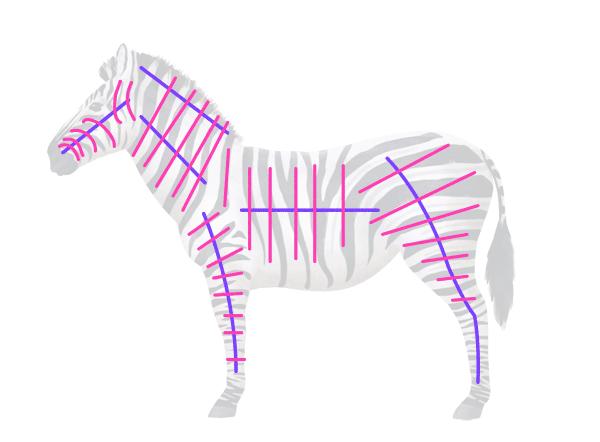 how to draw zebra pattern stripes
