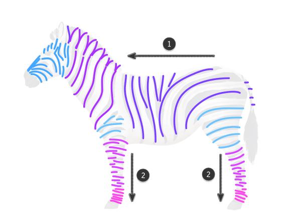 how to draw zebra pattern stripes 2
