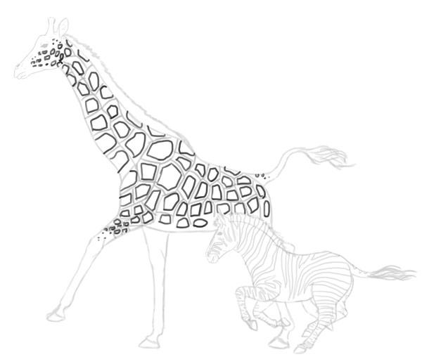 how to draw zebra giraffe 11