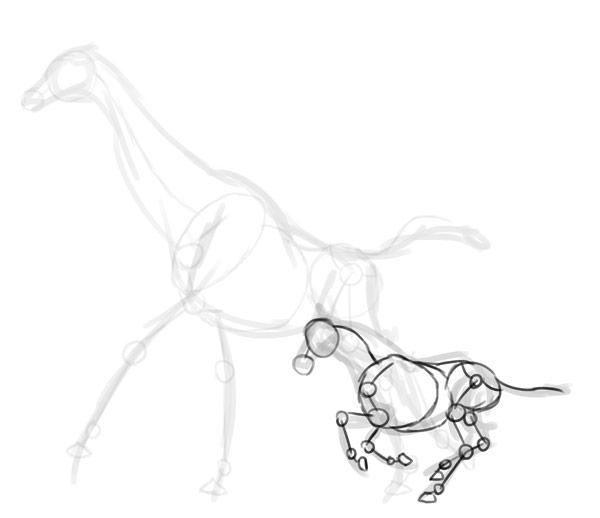 how to draw zebra giraffe 4