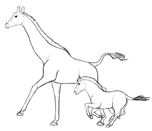 how to draw zebra giraffe 7