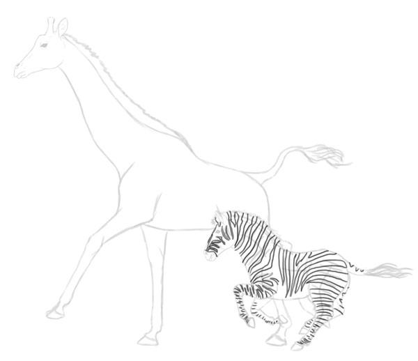 how to draw zebra giraffe 9