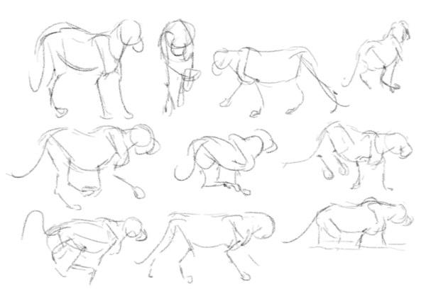 how to practice animal gestures