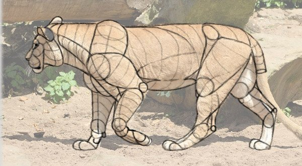 how to draw lion from imagination body scheme