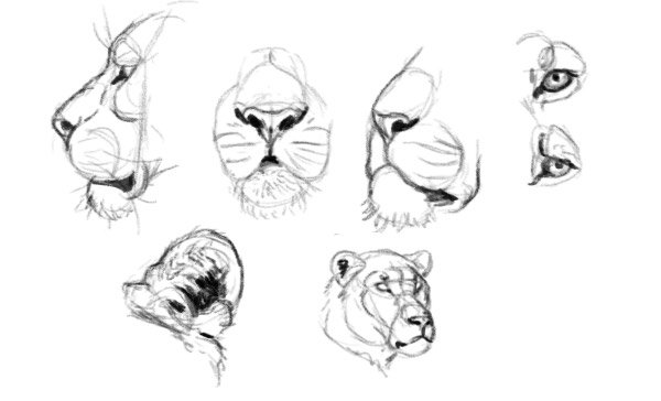 how to practice detail draw lion eyes mouth nose