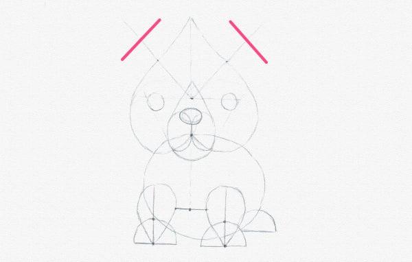 draw ears width