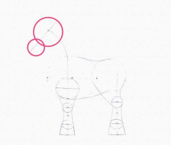 draw pony head circles