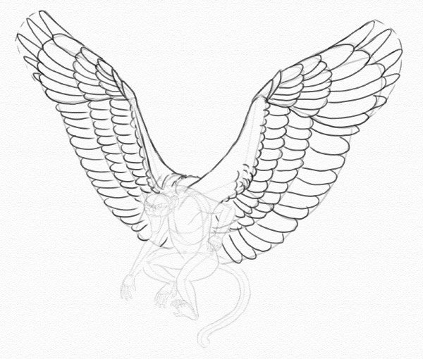 draw wings slotted primaries done