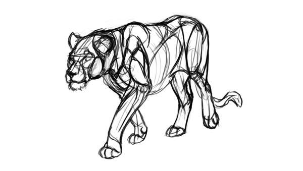 drawing lion