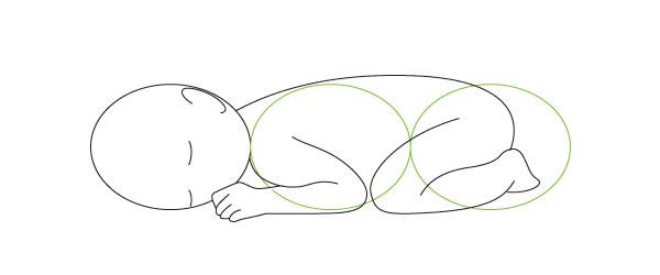 Newborn proportions