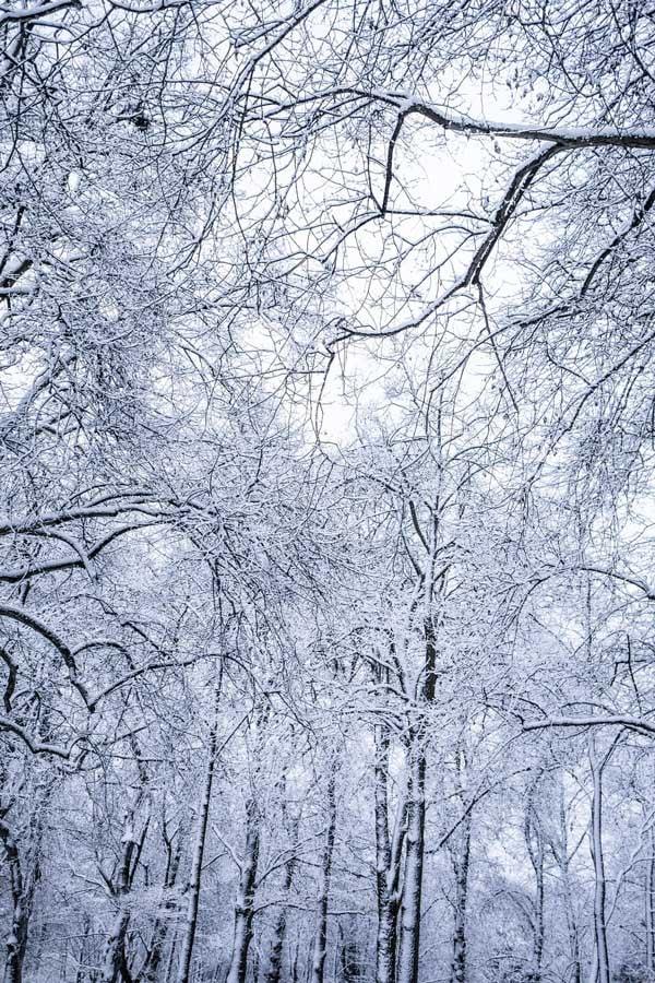 stock image icy scene