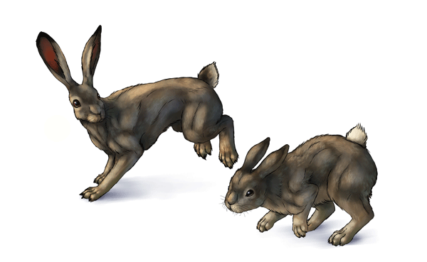 Illustration for tutorial How to Draw Hares and Rabbits