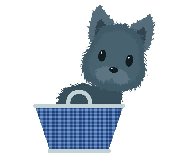 placing Toto in the basket