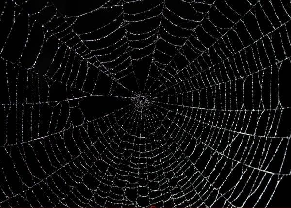 Spider Web Texture