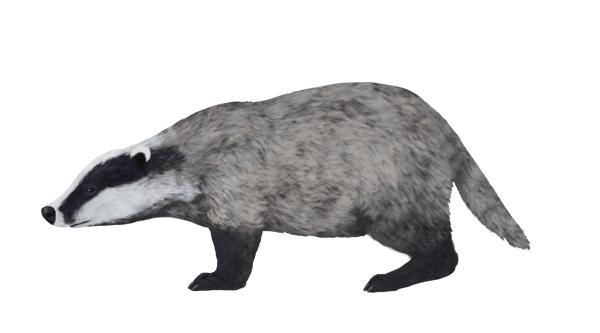Colour Scheme for a Badger