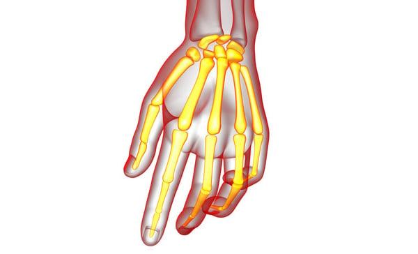 3D Skeleton Hand