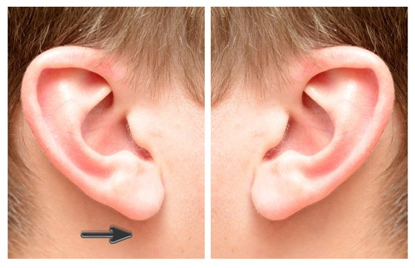 Ear Stock Photo Reference for Drawing