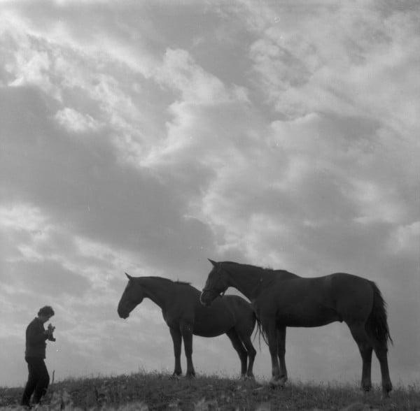 Anna Brown photographing horses Eston Saskatchewan