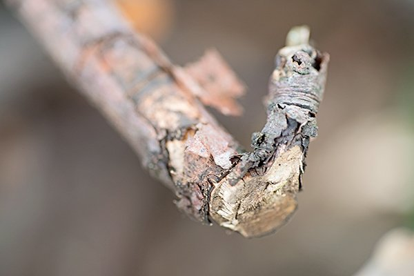 Close up of a twig