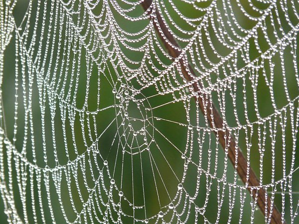 web with dew