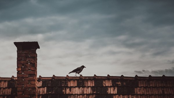bird on roof