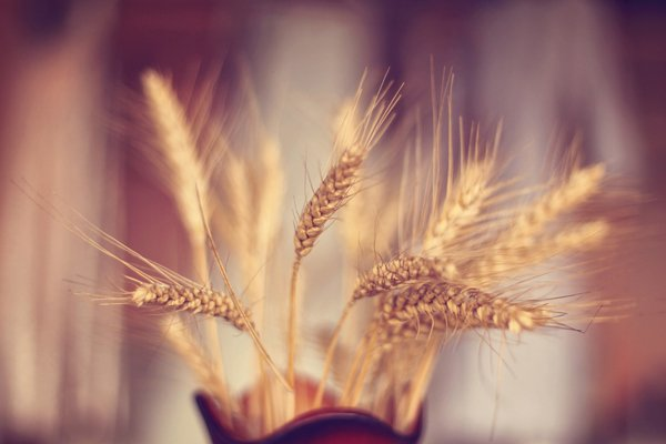 wheat in a vase