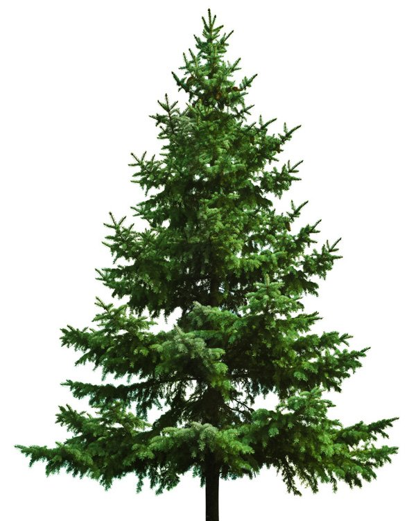Christmas tree Photodune