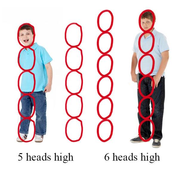 Head Height Comparison