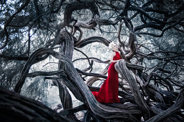 Enchanted Forest Photography by Lindsay Adler