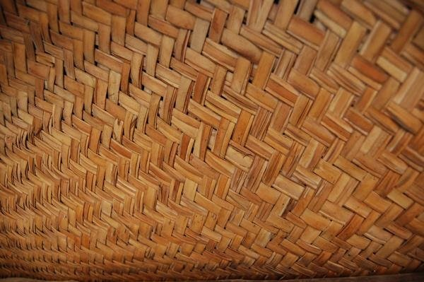 articotropical texture