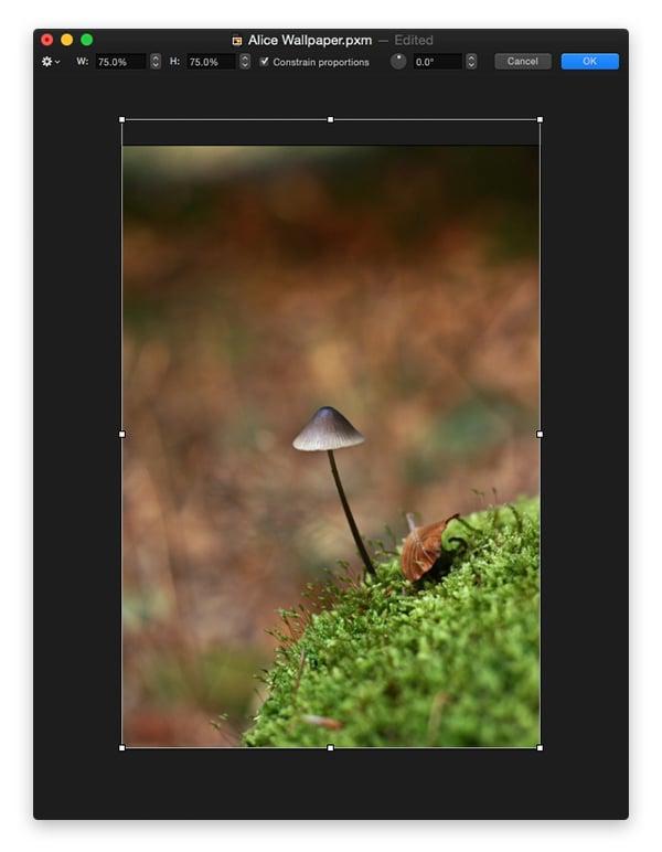 Import a background image base
