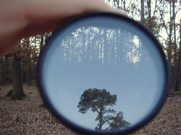 Reflection of a forest tree in polarizing filter